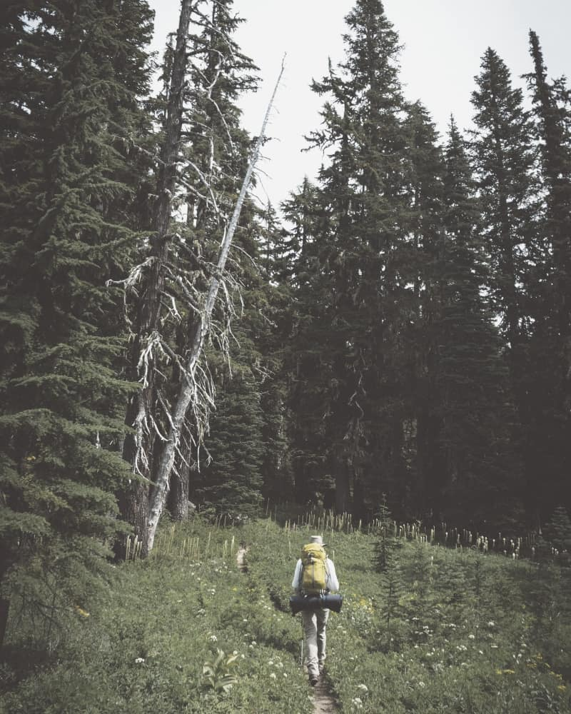 backpacker with backpack hiking through forest meadow
