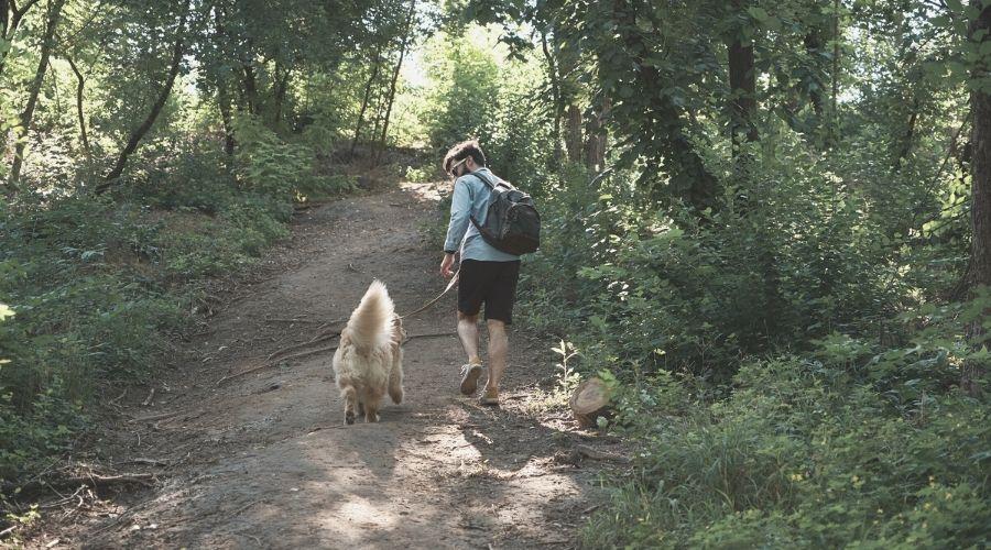 dog hiking on trail